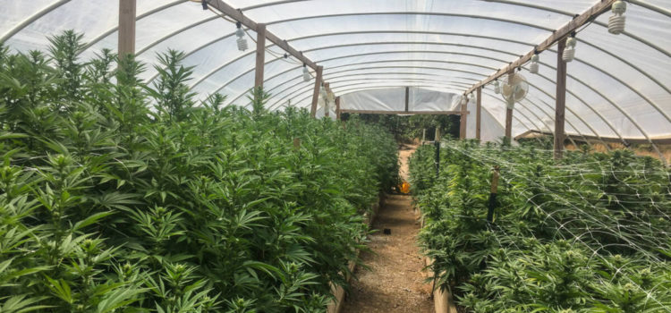 these-four-greenhouses-are-the-needle-on-socia-inequity-in-cannabis