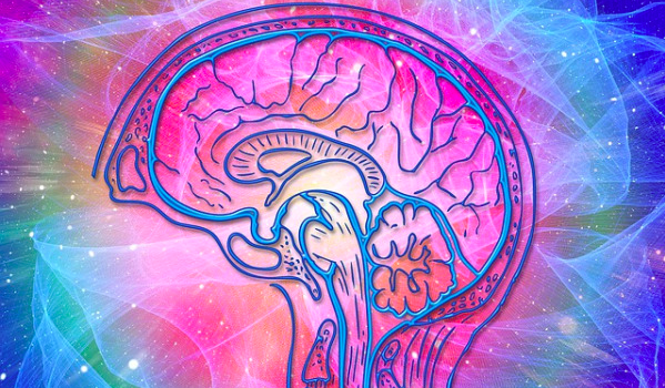 dmt-can-promote-neurogenesis,-improve-memory,-and-spatial-learning,-study-finds
