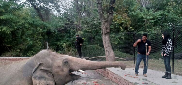 cher-visits-'world's-loneliest-elephant'-she-helped-rescue-from-captivity