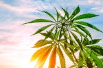 california-overturns-regulation-allowing-for-cannabis-billboards
