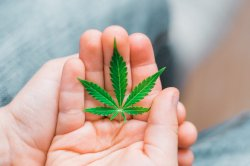 outcomes-of-scientific-trial-display-camouflage-doubtless-benefits-of-cannabis-for-children-with-autism